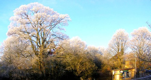Der Winter macht die Bäume silbern
